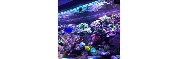 Matrix Meerwasser Systemprofile
