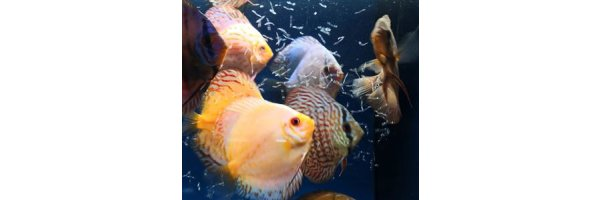 Lebendes Natur Fischfutter