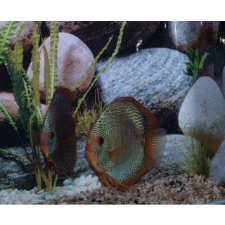 Diskus Snake Skin Blau 14cm