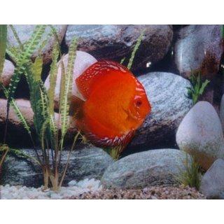 Diskus Marlboro Red 15-17cm